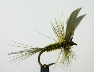 dry fly third place